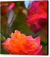 Rose 191 Canvas Print by Pamela Cooper