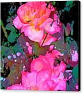 Rose 193 Canvas Print by Pamela Cooper