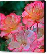 Rose 203 Canvas Print by Pamela Cooper