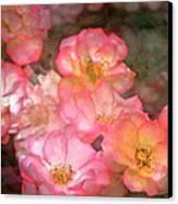Rose 212 Canvas Print by Pamela Cooper