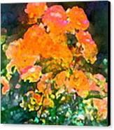 Rose 215 Canvas Print by Pamela Cooper