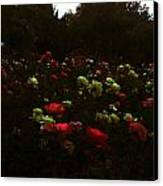 Rose Garden Canvas Print by Lucy D