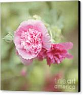 Rose Of Sharon Canvas Print by Kay Pickens