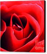 Rose Red Canvas Print by Darren Fisher