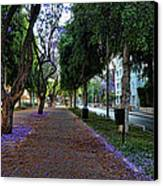 Rothschild Boulevard Canvas Print by Ron Shoshani