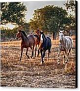 Running Horses Canvas Print by Kristina Deane