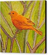 Saffron Finch Canvas Print by Anna Skaradzinska