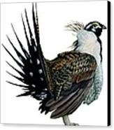 Sage Grouse  Canvas Print by Anonymous
