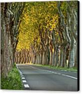 Saint Remy Trees Canvas Print by Brian Jannsen