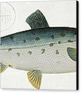 Salmon Canvas Print by Andreas Ludwig Kruger