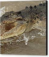 Saltwater Crocodile Canvas Print by Bob Christopher
