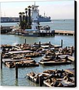 San Francisco Pier 39 Sea Lions 5d26102 Canvas Print by Wingsdomain Art and Photography