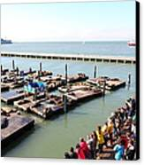 San Francisco Pier 39 Sea Lions 5d26109 Canvas Print by Wingsdomain Art and Photography