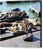 San Francisco Pier 39 Sea Lions 5d26113 Canvas Print by Wingsdomain Art and Photography