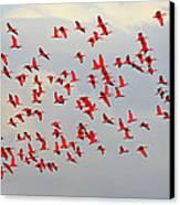 Scarlet Sky Canvas Print by Tony Beck