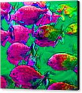School Of Piranha V2 - Square Canvas Print by Wingsdomain Art and Photography