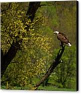 Screaming Eagle Canvas Print by Thomas Young