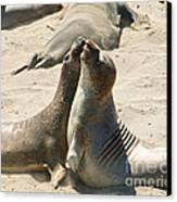 Sea Lion Love From The Book My Ocean Canvas Print by Artist and Photographer Laura Wrede