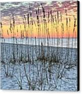 Sea Oat Sunrise Canvas Print by JC Findley
