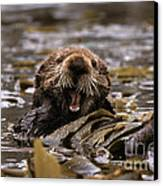 Sea Otters Canvas Print by Ron Sanford