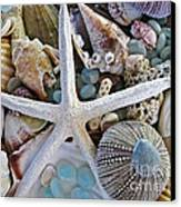 Sea Treasure Canvas Print by Colleen Kammerer
