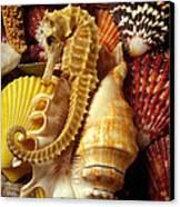 Seahorse Among Sea Shells Canvas Print by Garry Gay