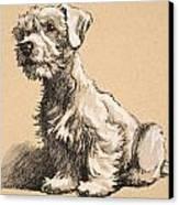 Sealyham Canvas Print by Cecil Charles Windsor Aldin