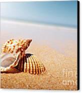 Seashell And Conch Canvas Print by Carlos Caetano