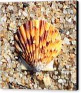 Seashell On Sandy Beach Canvas Print by Carol Groenen