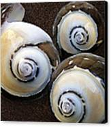 Seashells Spectacular No 23 Canvas Print by Ben and Raisa Gertsberg