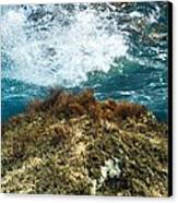 Seaweed Canvas Print by Science Photo Library