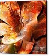 Seeds II Canvas Print by Yanni Theodorou