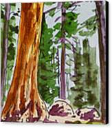 Sequoia Park - California Sketchbook Project  Canvas Print by Irina Sztukowski