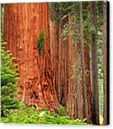 Sequoias Canvas Print by Inge Johnsson
