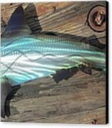 Shark Abstract Metal Wall Art Canvas Print by Robert Blackwell