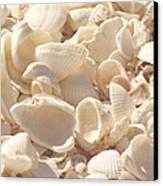 She Sells Seashells Canvas Print by Kim Hojnacki