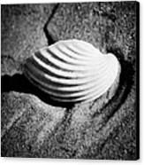 Shell On Sand Black And White Photo Canvas Print by Raimond Klavins