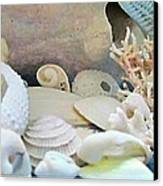 Shells In Pastels Canvas Print by Danielle  Parent