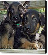 Shepherd Pups 2 Canvas Print by Aimee L Maher Photography and Art Visit ALMGallerydotcom