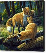 Red Foxes - Sibling Rivalry Canvas Print by Crista Forest
