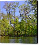 Silver River Florida Canvas Print by Christine Till