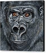 Silverback Canvas Print by Janis  Cornish