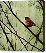 Sittin' In A Tree Canvas Print by Rebecca Cozart