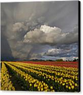 Skagit Valley Storm Canvas Print by Mike Reid