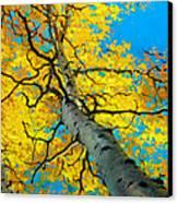 Sky High 3 Canvas Print by Gary Kim