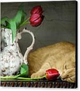 Sleepy Tulips Canvas Print by Diana Angstadt
