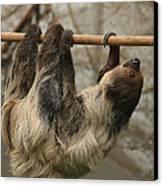 Sloth Canvas Print by Ellen Henneke