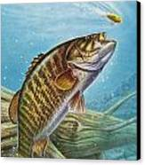 Smallmouth Bass Canvas Print by JQ Licensing