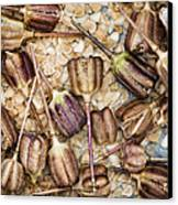 Snakes Head Fritillary Flower Seeds Pattern Canvas Print by Tim Gainey