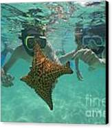 Snorkellers Holding A Four Legs Starfish Canvas Print by Sami Sarkis
